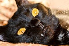 Gato negro con los ojos amarillos Foto de archivo