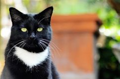 Gato negro con los ojos verdes afuera en el fondo del patio fotos de archivo