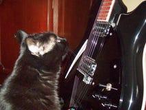 Gato negro con sue?os grandes imagen de archivo libre de regalías