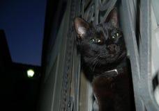 Gato negro de la noche Imagen de archivo