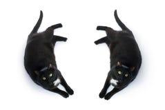 Gato negro de mentira aislado sobre el fondo blanco Imagen de archivo