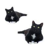 Gato negro de mentira aislado sobre el fondo blanco Fotografía de archivo
