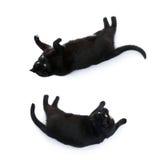 Gato negro de mentira aislado sobre el fondo blanco Imagenes de archivo