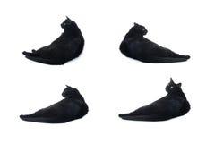 Gato negro de mentira aislado sobre el fondo blanco Foto de archivo libre de regalías