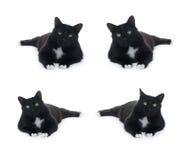 Gato negro de mentira aislado sobre el fondo blanco Foto de archivo