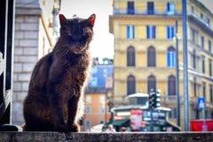 Gato negro de Roma foto de archivo