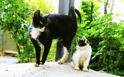Gato negro del ` en la yarda Fotografía de archivo