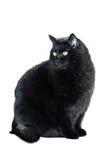 Gato negro delante de un fondo blanco Imágenes de archivo libres de regalías