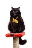 Gato negro divertido que desgasta el arqueamiento amarillo aislado Imagenes de archivo