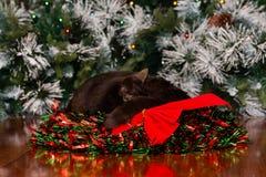 Gato negro dormido en guirnalda de la Navidad con la cinta roja fotos de archivo libres de regalías