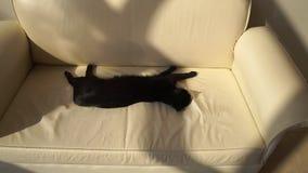 Gato negro dormindo em um sofá de couro bege, em câmera lenta video estoque