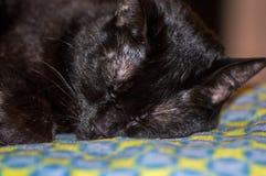 Gato negro el dormir Fotografía de archivo