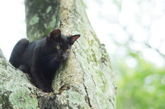 Gato negro en árbol Fotos de archivo