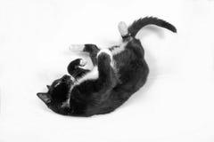 Gato negro en blanco Fotografía de archivo