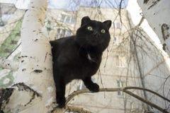Gato negro en el árbol Imágenes de archivo libres de regalías