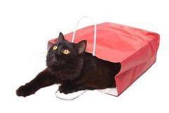 Gato negro en el bolso rojo aislado Foto de archivo