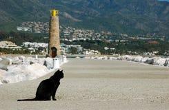 Gato negro en el camino Fotos de archivo libres de regalías