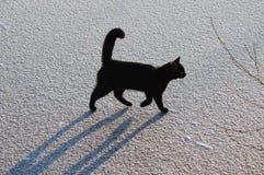 Gato negro en el hielo. acción 2. Imágenes de archivo libres de regalías