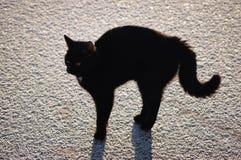 Gato negro en el hielo. acción 3. Fotos de archivo libres de regalías