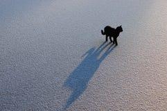 Gato negro en el hielo. acción 5. Imágenes de archivo libres de regalías