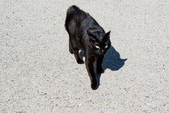 Gato negro en el pavimento en el sol brillante fotos de archivo libres de regalías