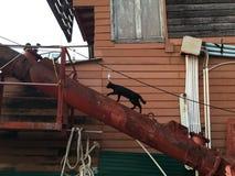 Gato negro en el puerto Fotografía de archivo