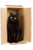 Gato negro en el rectángulo aislado Imagen de archivo