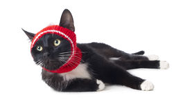 Gato negro en el sombrero Fotos de archivo libres de regalías