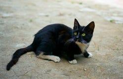 Gato negro en el suelo Imágenes de archivo libres de regalías