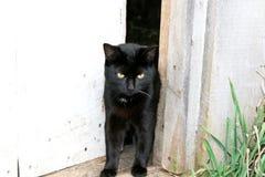 Gato negro en el umbral Foto de archivo libre de regalías