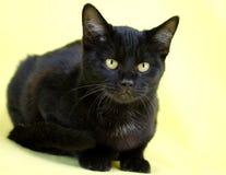 Gato negro en fondo amarillo Fotografía de archivo