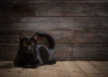 Gato negro en fondo de madera Imagenes de archivo