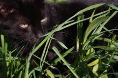 Gato negro en hierba Fotos de archivo libres de regalías