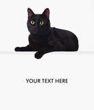 Gato negro en la bandera en blanco Foto de archivo libre de regalías