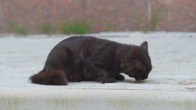 Gato negro en la calle almacen de video