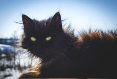 Gato negro en la calle imágenes de archivo libres de regalías