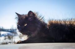 Gato negro en la calle fotografía de archivo libre de regalías