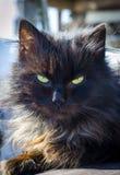 Gato negro en la calle foto de archivo