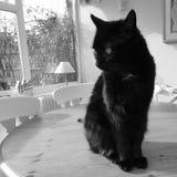 Gato negro en la tabla imagen de archivo