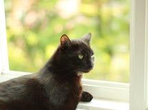 Gato negro en la ventana Imágenes de archivo libres de regalías