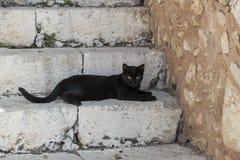 Gato negro en las escaleras imágenes de archivo libres de regalías
