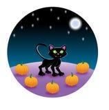 Gato negro en remiendo de la calabaza Imagen de archivo
