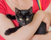 Gato negro en sus manos Foto de archivo
