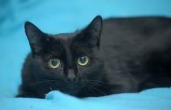 Gato negro en un azul Foto de archivo libre de regalías