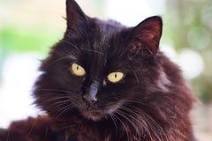 Gato negro en una almohada imagenes de archivo
