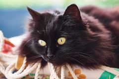 Gato negro en una almohada foto de archivo