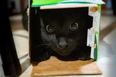 Gato negro en una caja imagen de archivo libre de regalías