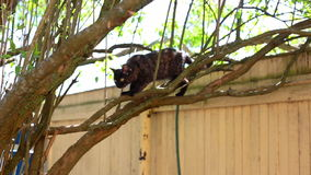 Gato negro en una pared al aire libre metrajes