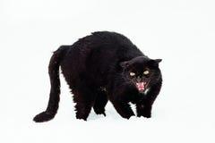 Gato negro enojado en una nieve Foto de archivo libre de regalías