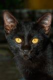 Gato negro, gato Foto de archivo libre de regalías